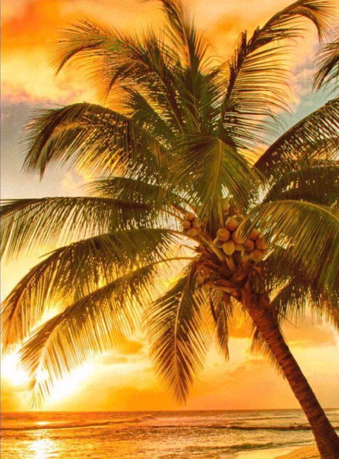 Полотенце вафельное пляжное 80х150 80150П Пальма